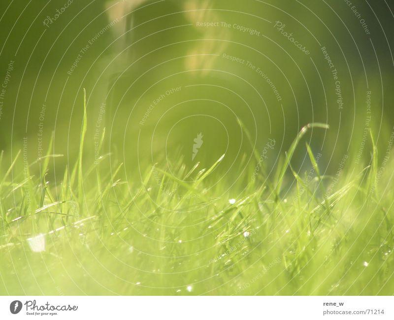 Sonnenbaden im Park Wiese Sommer grün Halm Gras Garten Rasen