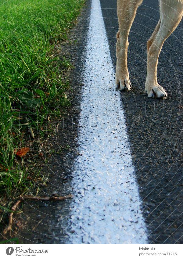 Pfoten-Weg! Gras Straßenrand weiß Linie Hund Beine Wege & Pfade Natur Detailaufnahme Körperteile Fahrbahnmarkierung außergewöhnlich Straßenhund