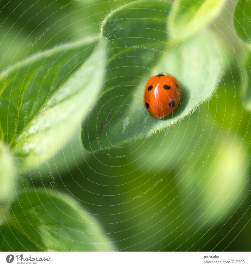 käferlich Marienkäfer 1 Tier Zeichen Glück Hoffnung Optimismus Punkt Käfer Frühling Ei rot-grün Farbfoto Außenaufnahme Nahaufnahme Muster Strukturen & Formen
