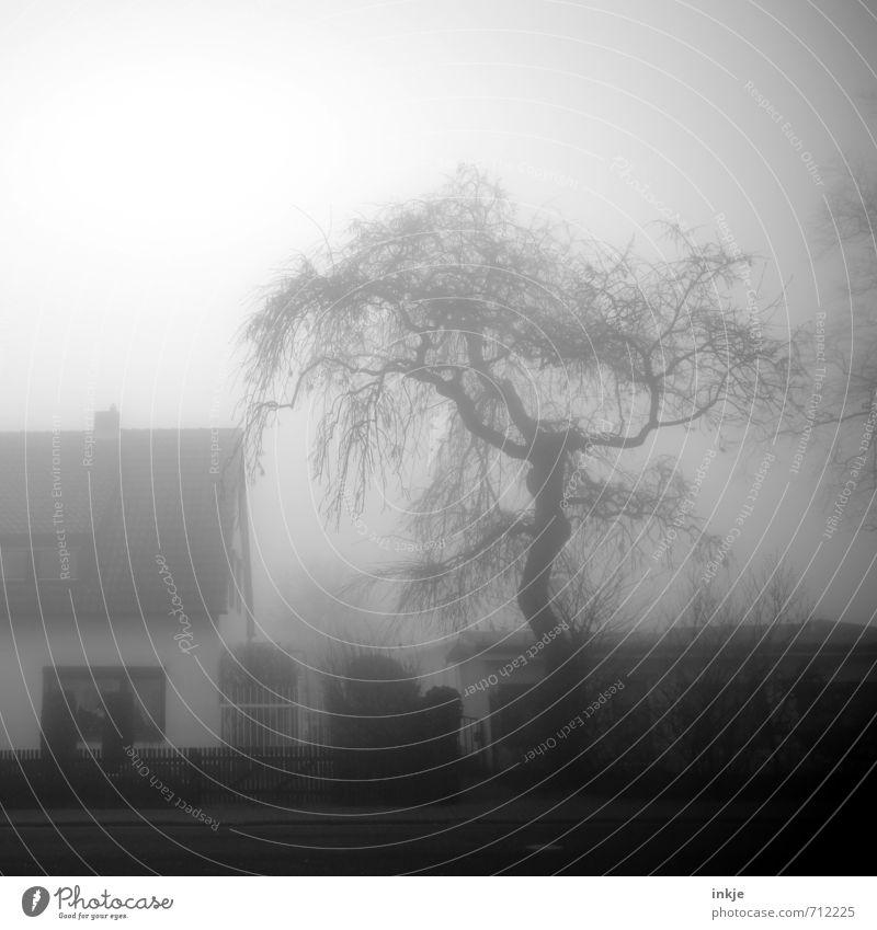 spooky neighbourhood III Umwelt Landschaft Luft Himmel Frühling Herbst schlechtes Wetter Nebel Baum Wildpflanze Garten Dorf Kleinstadt Menschenleer Haus