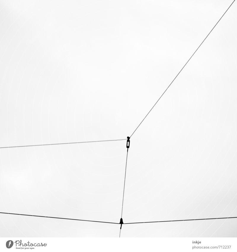 Hals über Kopf Kabel Menschenleer Verkehr Öffentlicher Personennahverkehr Bahnfahren Schienenverkehr S-Bahn Straßenbahn Schienenfahrzeug Schienennetz Linie Netz