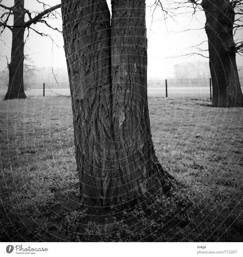 für immer Umwelt Natur Frühling Herbst Nebel Baum Baumrinde Baumstamm Park Wachstum alt außergewöhnlich dunkel Zusammensein groß grau schwarz Gefühle Einigkeit