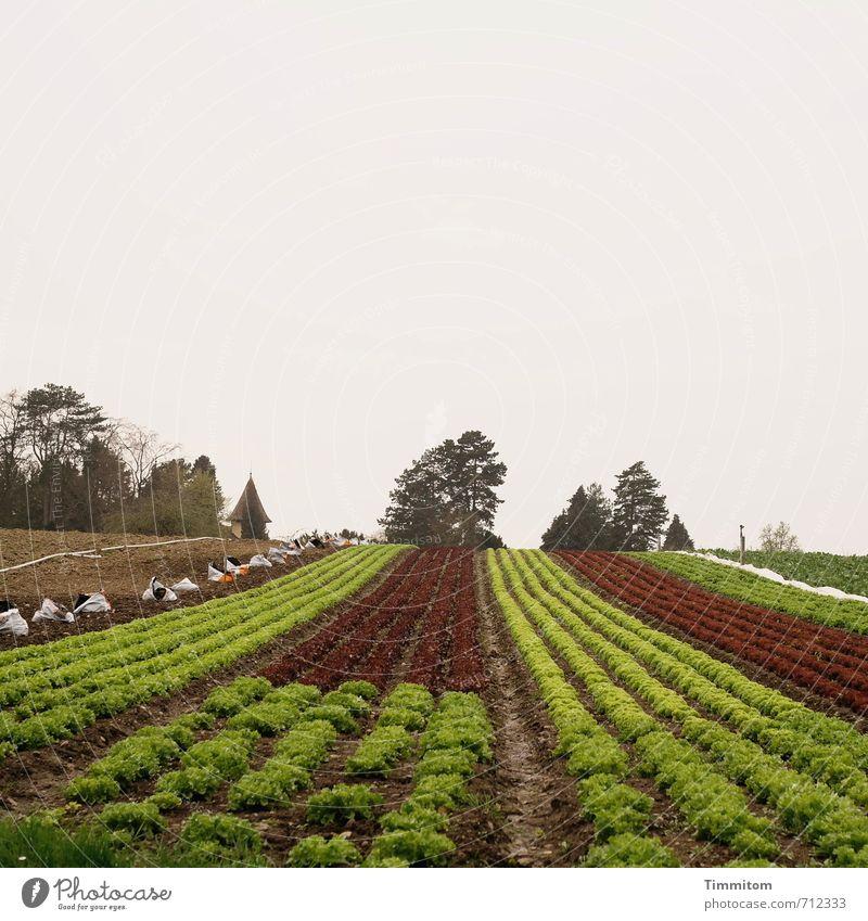 AST 7 | Feldfrüchte. Ernährung Vegetarische Ernährung Tourismus Umwelt Natur Landschaft Pflanze Erde Baum Nutzpflanze Insel Reichenau Wachstum einfach natürlich
