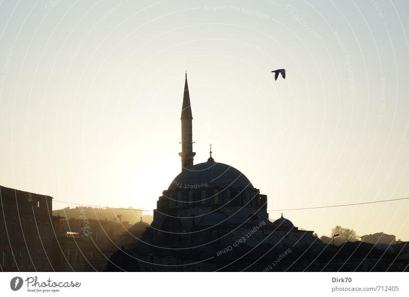 Abendlicht im Morgenland III alt Stadt Sonne Haus Ferne Frühling Architektur Religion & Glaube Vogel Schönes Wetter Spitze Turm historisch Wolkenloser Himmel