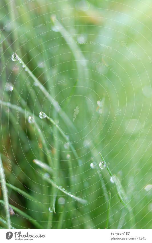 gipfeltreffen Wiese Gras grün nass frisch Seil Regen Morgen