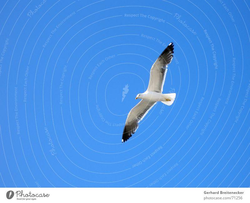 Flug Nummer 749 Himmel Natur blau weiß Meer Sommer Freude Tier Leben Gefühle Freiheit Luft träumen Vogel Wind fliegen