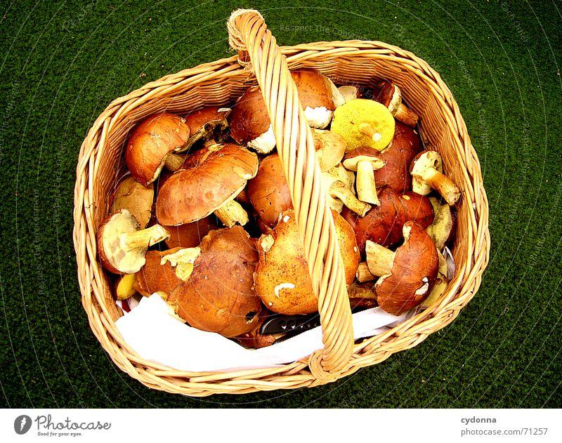 Das Mittag ist gesichert... Natur Ernährung Lebensmittel Gesundheit Zusammensein Erfolg Sammlung Bioprodukte Pilz Mahlzeit Korb sortieren Maronen
