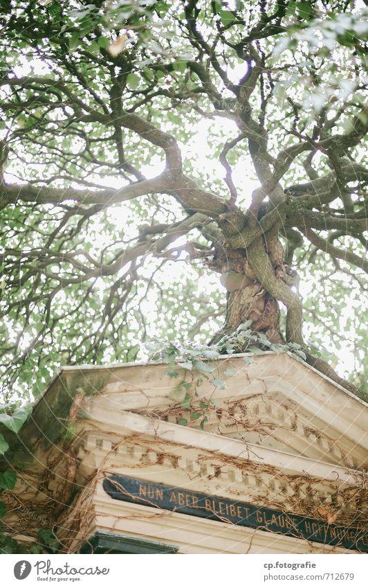 Glaube und Hoffnung Natur Pflanze Sommer Baum Herbst Leidenschaft Mut Friedhof Grab trösten Grabmal