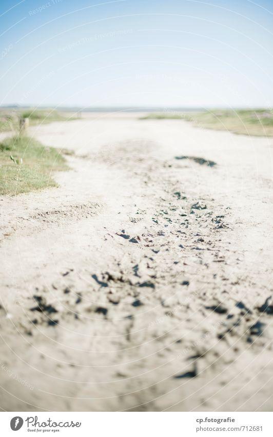 glücklicher Weg Natur Landschaft Sand Wolkenloser Himmel Sommer Schönes Wetter Strand Wärme blau gelb Fußspur Außenaufnahme Menschenleer Textfreiraum oben
