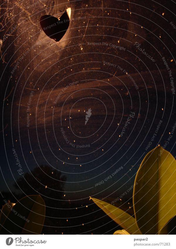Nachtfenster Pflanze dunkel Stimmung Herz Stern Glas Sternenhimmel Stechmücke