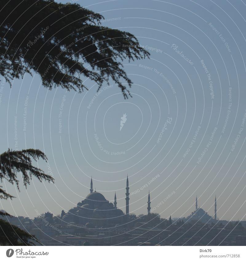 Süleymaniye- und Fatih-Moschee Ferien & Urlaub & Reisen Sightseeing Städtereise Wolkenloser Himmel Frühling Schönes Wetter Pflanze Baum Ast Kiefer Istanbul