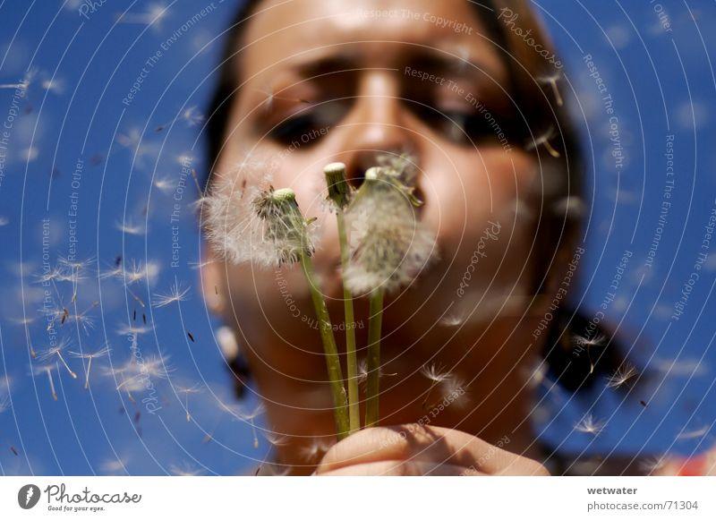 Blowing Dandelion blau Sommer Mädchen Gesicht Glück Luft Wind fliegen Wunsch Löwenzahn blasen Samen Kind Pollenflug