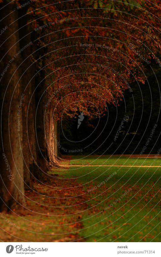 Der Weg in den Wald Baum Herbst kalt Trauer Blatt Festung standhaft Leben Ferne Heimweh Allee Vertrauen es wird winter grüne wiese Traurigkeit Wege & Pfade
