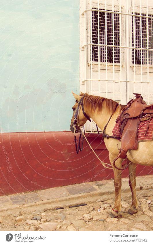 Trinidad. (I) Ferien & Urlaub & Reisen blau weiß rot ruhig Tier Fenster Wand Reisefotografie Idylle Wildtier Abenteuer Pause Pferd Sommerurlaub ländlich