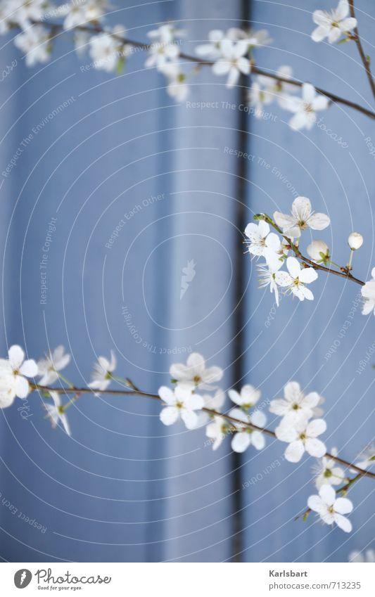 Stufen Gesundheit Garten Muttertag Umwelt Natur Pflanze Sonnenlicht Frühling Schönes Wetter Baum Blume Sträucher Blüte Mauer Wand Fassade Frühlingsgefühle