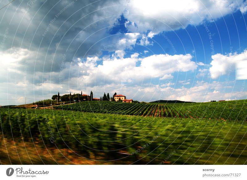 Im Rausch der Toskana Ferne Freiheit Sommer Haus Landschaft Pflanze Himmel Wolken Schönes Wetter Sträucher Feld Hügel Dorf Bewegung grün Landhaus Hecke Wein