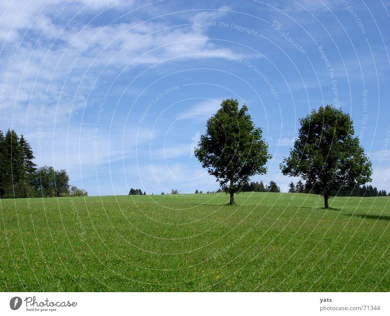Lautlos. Himmel Baum grün blau Sommer Wolken Wiese Gras Allgäu
