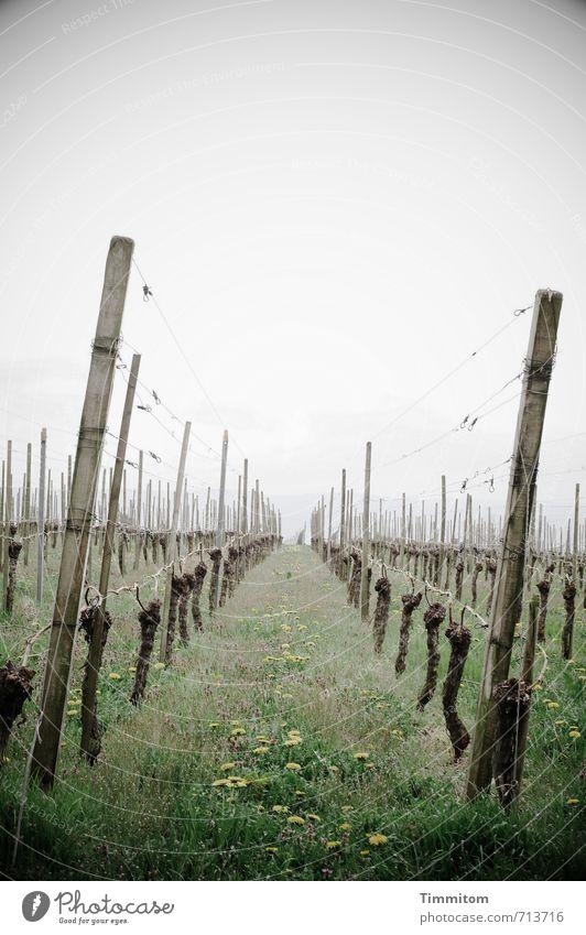 AST 7   Aufstieg zum Lukow-Hügel. grün Pflanze Umwelt Gefühle Gras grau Holz natürlich Metall Ordnung Wachstum ästhetisch einfach Wein Draht Nutzpflanze