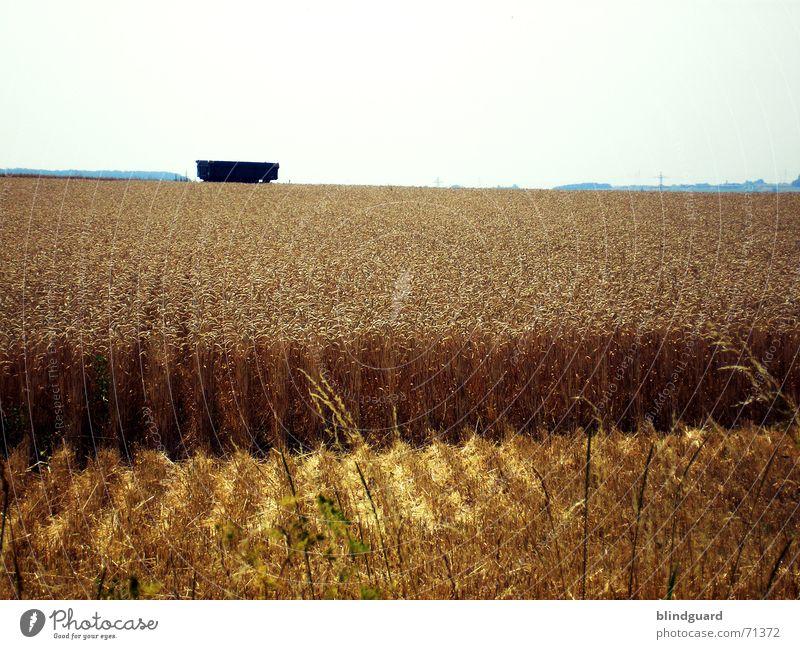 Anschnitt Himmel blau Baum Sommer Wärme hell Arbeit & Erwerbstätigkeit Feld Horizont fliegen Ausflug verrückt Europa Physik Getreide Ernte