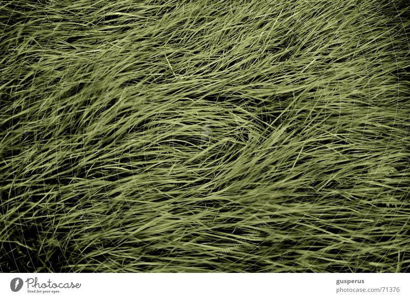 { ChaosTheorie 1ins } Natur grün Gras hoch Wachstum liegen Halm durcheinander beruhigend verlegen