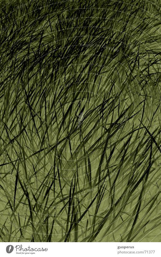 { ChaosTheorie 2wei } Natur grün Gras hoch Wachstum liegen Halm durcheinander beruhigend verlegen