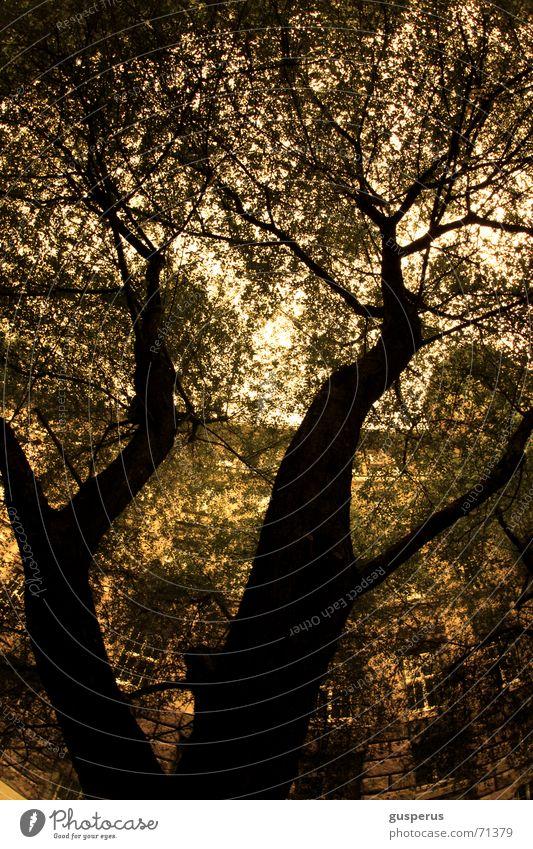 { ChaosTheorie 3rei } Natur grün hoch Wachstum liegen durcheinander beruhigend verlegen