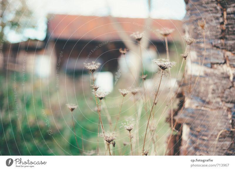 Wächter Natur Pflanze Herbst Baum Gras Garten Haus trocken Baumstamm Baumrinde Korbblütengewächs Außenaufnahme Menschenleer Textfreiraum links