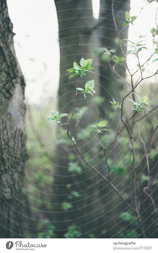Buschwerk 2 grün Pflanze Baum Wiese Frühling natürlich braun Garten Sträucher schlechtes Wetter