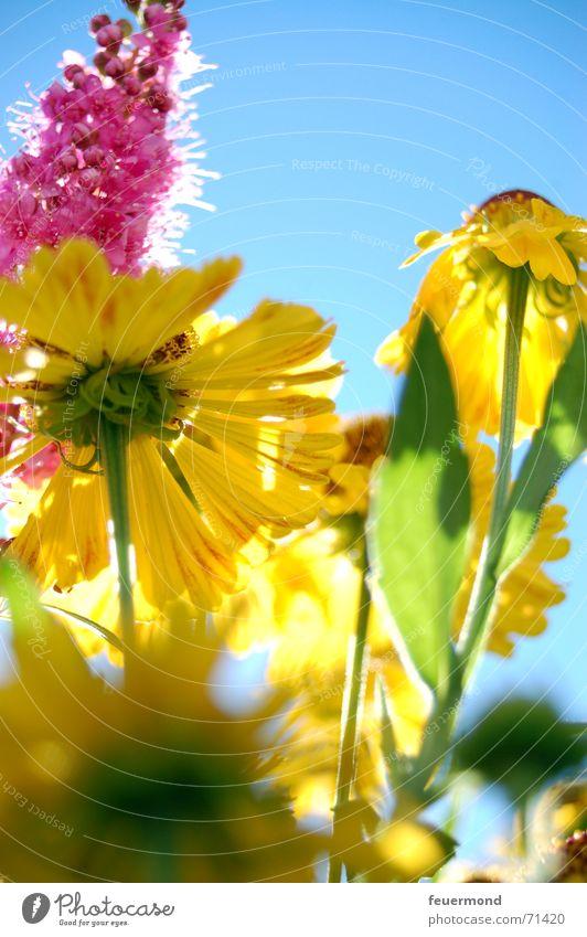 Bunter Spätsommer... (1) Sonne Blume Sommer Freude gelb Farbe Blüte Garten Glück hell Fröhlichkeit