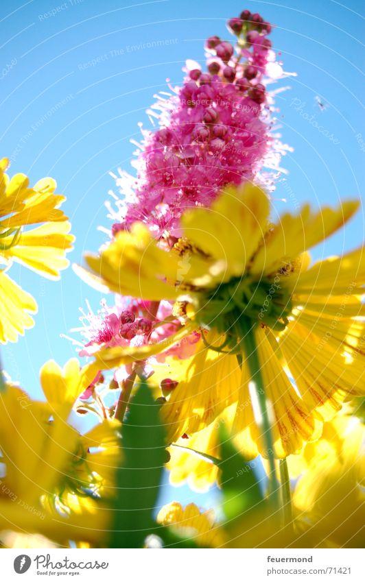 Bunter Spätsommer... (2) Sommer mehrfarbig Fröhlichkeit Blüte Licht hell Sonne Blume gelb Farbe Freude Glück Garten Schatten multicolored colors sun joy merrily