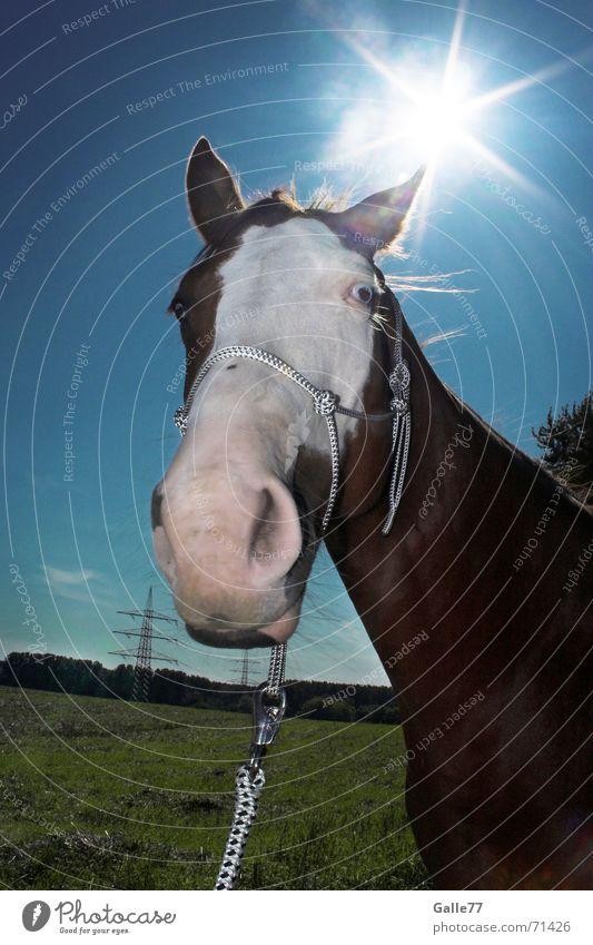 Sonnenpferd Pferd Wiese Nüstern Gegenlicht Halfter Himmel paint horse blau Fischauge