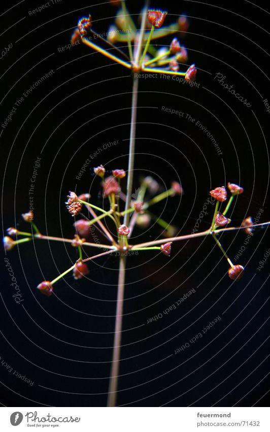 Teichpflanzengedöns Pflanze schwarz dunkel Teich Wasserpflanze