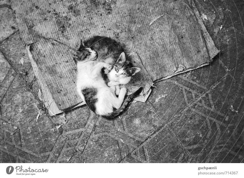Katzenbabies auf der Strasse Tier Haustier 2 Tierjunges Tierfamilie schlafen Traurigkeit schön kuschlig klein Krankheit Vertrauen Sicherheit Warmherzigkeit
