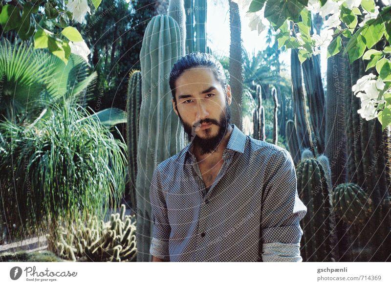 Oase maskulin Junger Mann Jugendliche Haare & Frisuren Gesicht 1 Mensch Natur Landschaft Pflanze Sonnenlicht Sommer Baum Kaktus Grünpflanze Wildpflanze exotisch