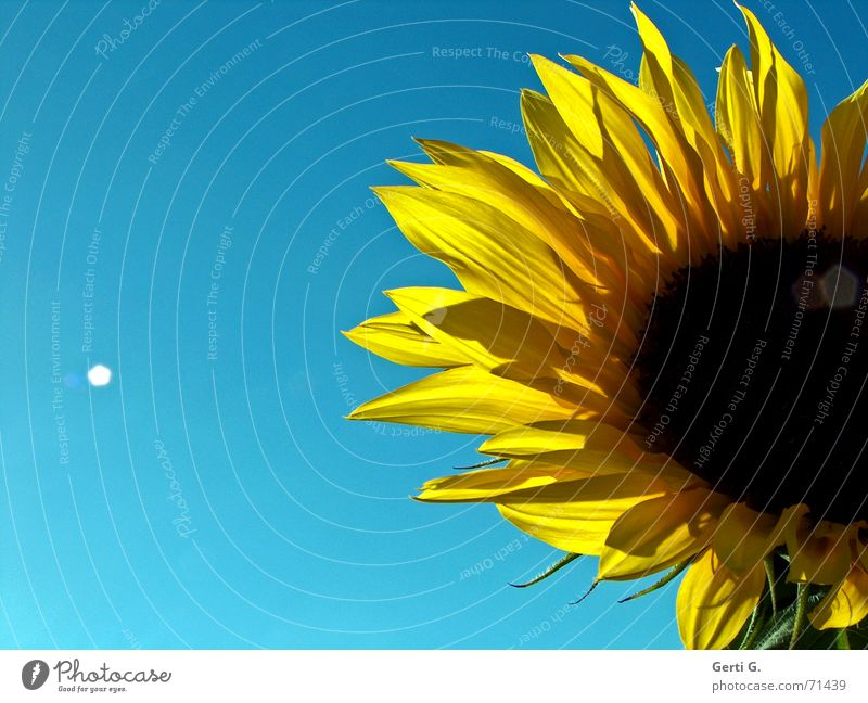 immer schön strahlen Sonne blau Sommer gelb Glück Wärme Beleuchtung Physik Alkoholisiert Sonnenblume Schönes Wetter Brot Blendenfleck Lichtfleck Sonnenblumenkern