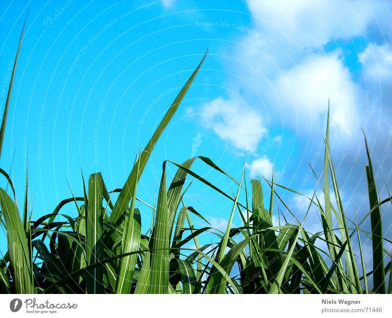 Froschperspektive Himmel Sonne grün blau Wolken Wiese Gras hell Sträucher