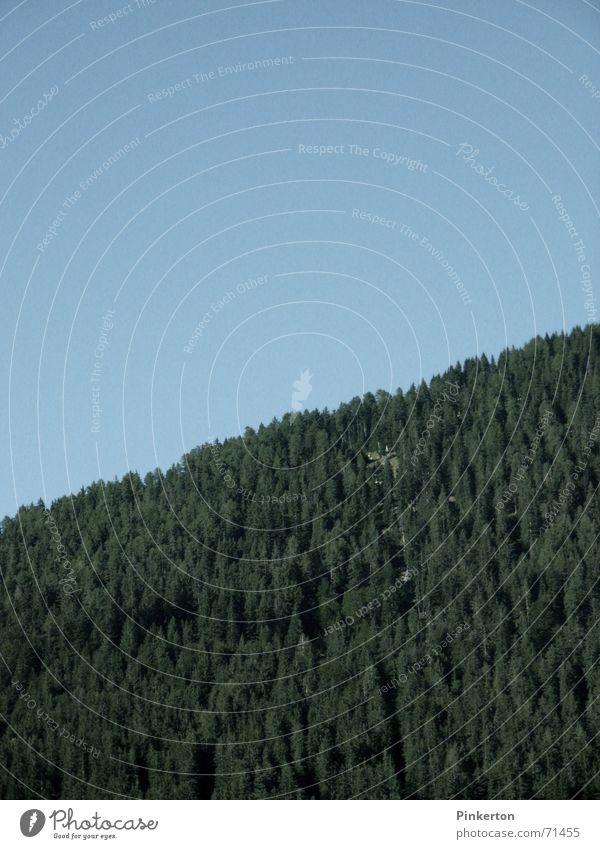 Wenn man die Natur wahrhaft liebt, so ... grün Wald Tanne Fichte Kiefer Nadelwald aufsteigen wandern Steigung zweifarbig Himmel blau verrückt Schönes Wetter