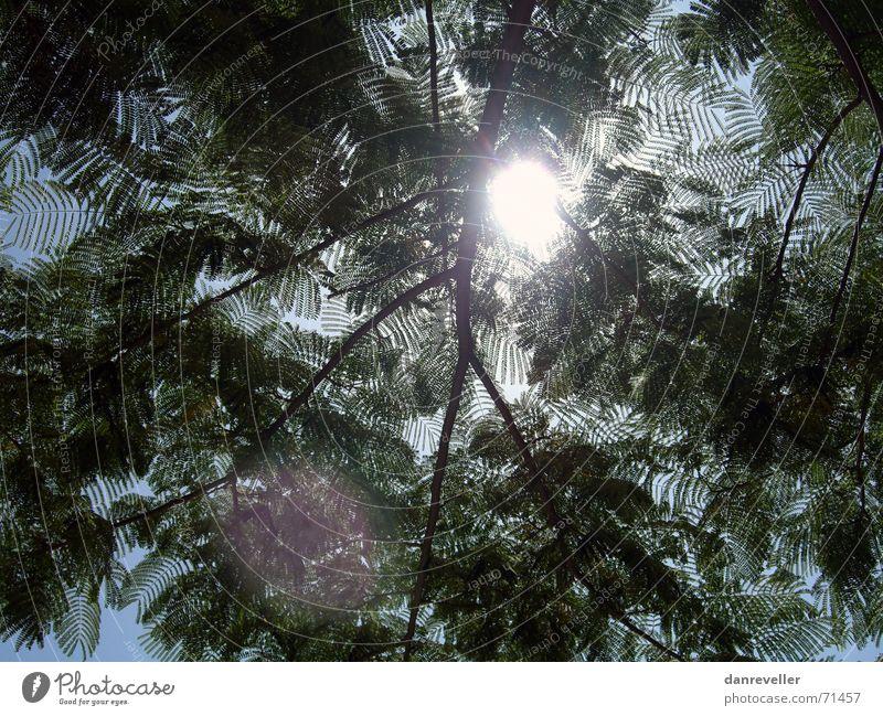 Parkbank-Chiller Himmel Baum Sonne grün blau Sommer Ferien & Urlaub & Reisen ruhig Blatt Erholung Wärme hell Pause Physik Ast Schönes Wetter