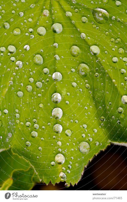 Waterdrops Wassertropfen Blatt grün nah frisch Natur Tau nass saftig Grünpflanze Frühling springen water waterdrop leave macr Makroaufnahme close fresh morning