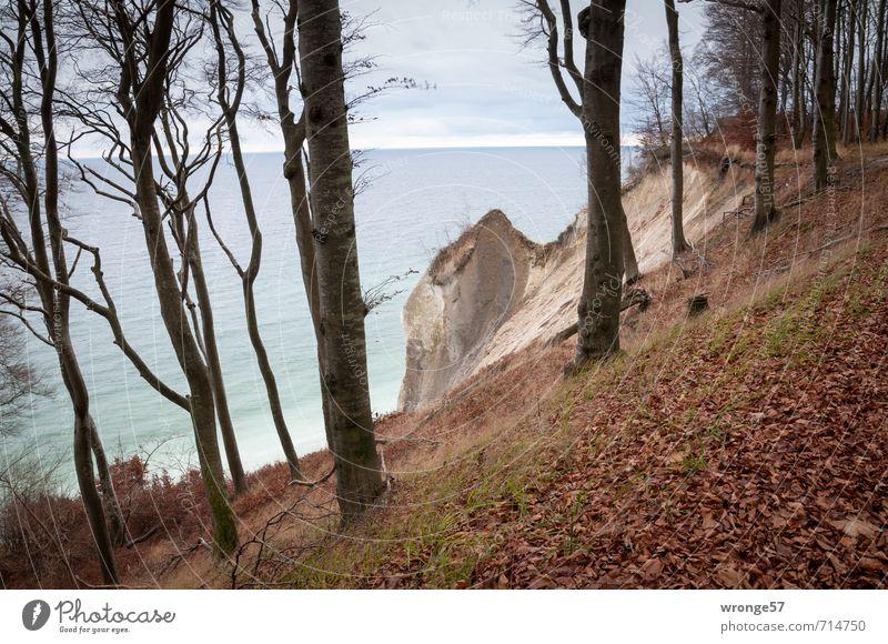 Fragment Natur Landschaft Pflanze Wasser Himmel Horizont Herbst Baum Wald Hügel Küste Bucht Ostsee Insel Rügen Buchenwald Jasmund blau braun Küstenwald