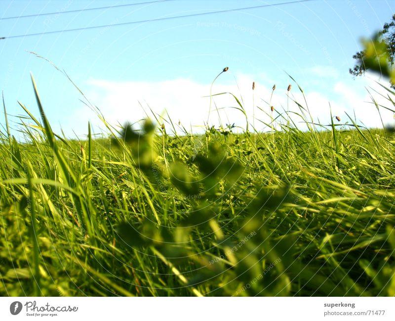 000 Himmel grün Baum Sommer Wiese Gras Frühling hell Fröhlichkeit Sträucher Kabel Schönes Wetter Vergänglichkeit Klarheit Rasen Weide