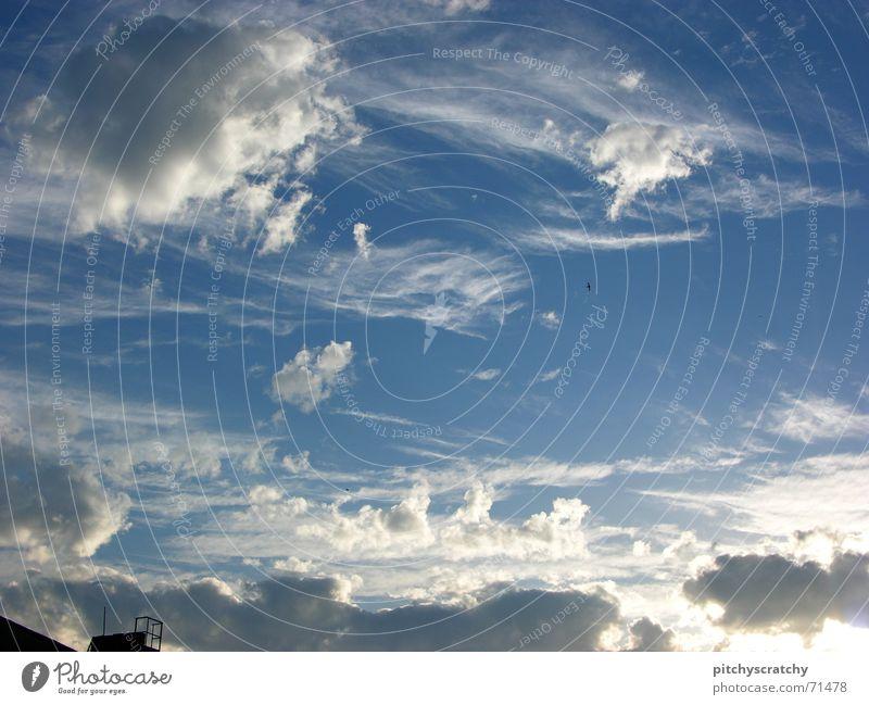 Heaven can't wait Wolken Sommer Vogel Kumulus Himmel schön blau Sonne Schornstein Himmelszelt Firmament