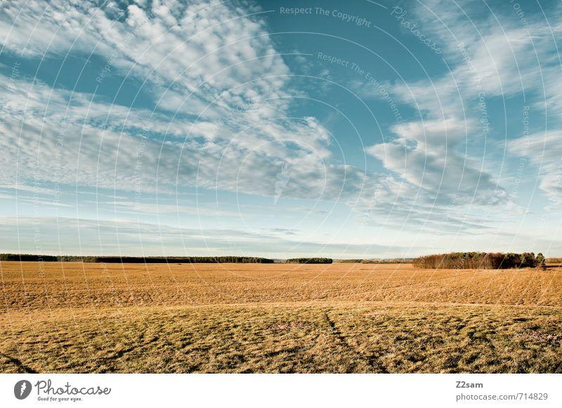 Feierabend Platzerl Himmel Natur Ferien & Urlaub & Reisen blau Sommer Einsamkeit Erholung ruhig Landschaft Wolken Ferne Wald Umwelt gelb Wege & Pfade Frühling