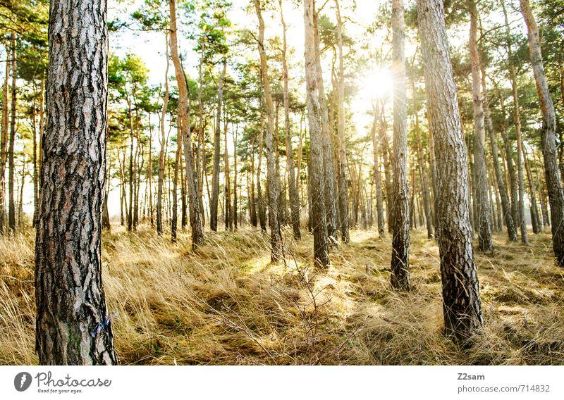 back to the woods Umwelt Natur Landschaft Sonne Sonnenaufgang Sonnenuntergang Sonnenlicht Frühling Sommer Pflanze Baum Gras Sträucher Wald Erholung ästhetisch