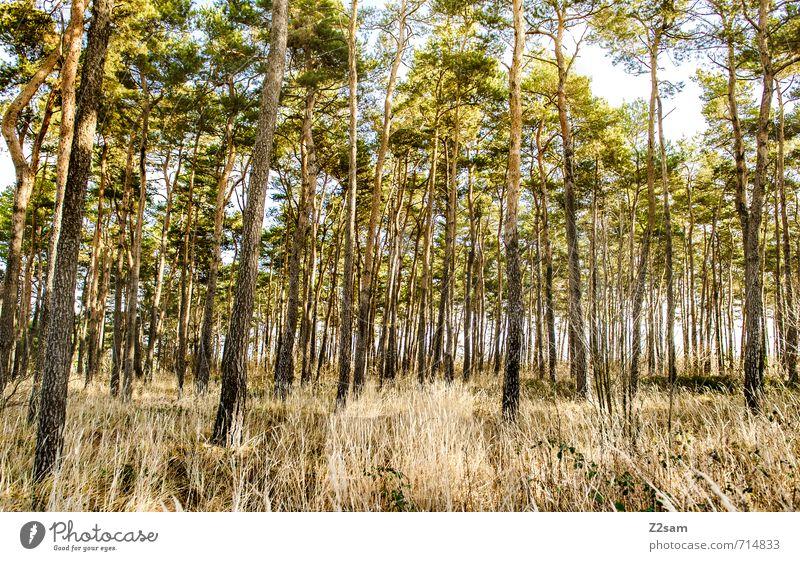back to the woods Umwelt Natur Landschaft Sonne Frühling Baum Blume Sträucher Wald ästhetisch frisch Gesundheit nachhaltig natürlich Wärme gelb grün