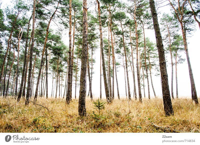 ZAUBERWALD III Umwelt Natur Landschaft Herbst schlechtes Wetter Nebel Baum Gras Sträucher Wald gruselig kalt nachhaltig natürlich grün ruhig Einsamkeit Idylle