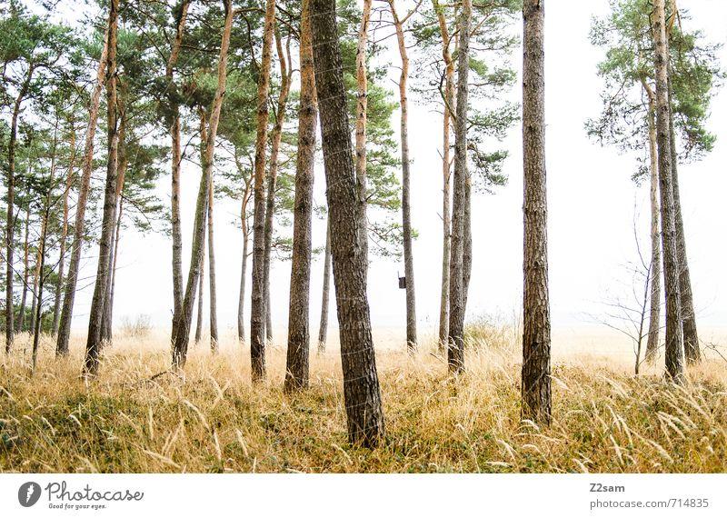 back to the woods Natur grün Pflanze Baum Sonne Einsamkeit Landschaft ruhig kalt Wald gelb Umwelt Herbst Frühling Gras natürlich
