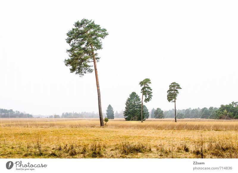 Bayerische Steppe Umwelt Natur Landschaft Herbst schlechtes Wetter Nebel Baum Sträucher Wiese Unendlichkeit kalt trist gelb grau grün ruhig Einsamkeit Erholung