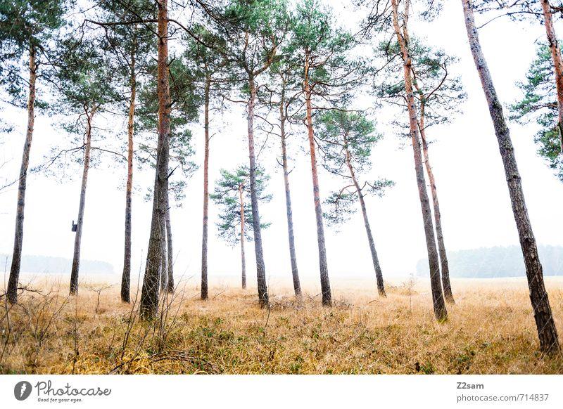 ZAUBERWALD IV Umwelt Natur Landschaft Herbst schlechtes Wetter Nebel Baum Gras Sträucher Wald gruselig kalt nachhaltig natürlich grün ruhig Einsamkeit Idylle