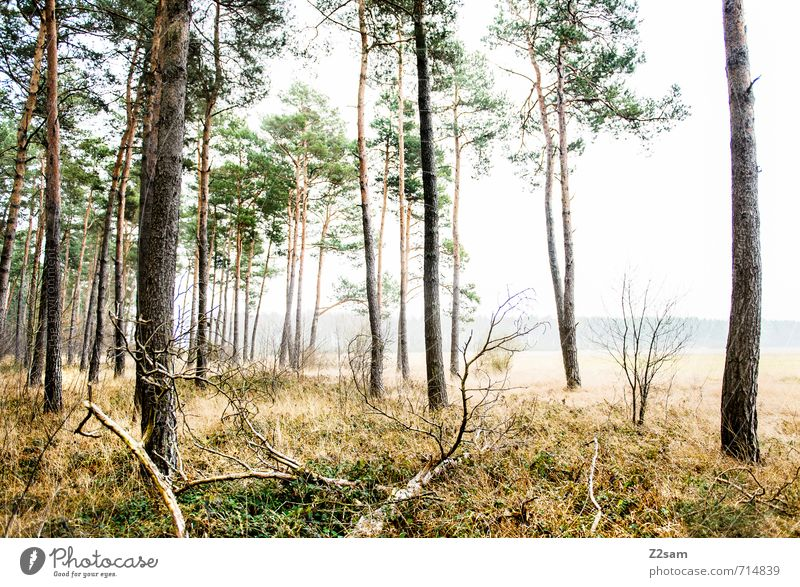 Zauberwald Natur grün Baum Einsamkeit Erholung ruhig kalt Wald Umwelt Herbst Gras grau natürlich Stimmung Nebel Idylle